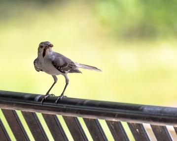 Hungry Bird!