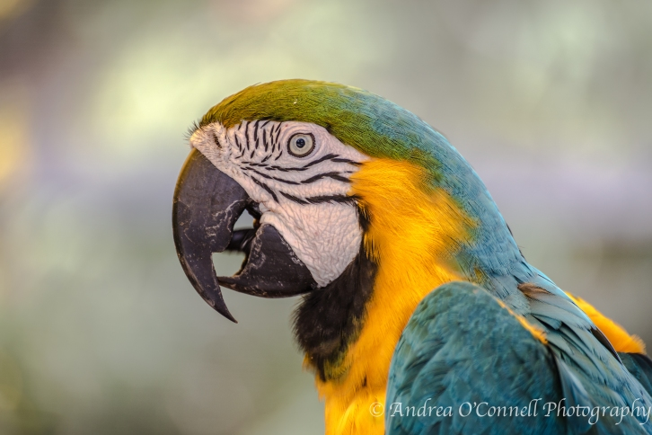 Original capture of a Happy Macaw