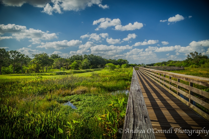 Another long view of a walkway in Wakaodahatchee