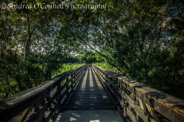 A walkway in Wakodahatchee Wetlands