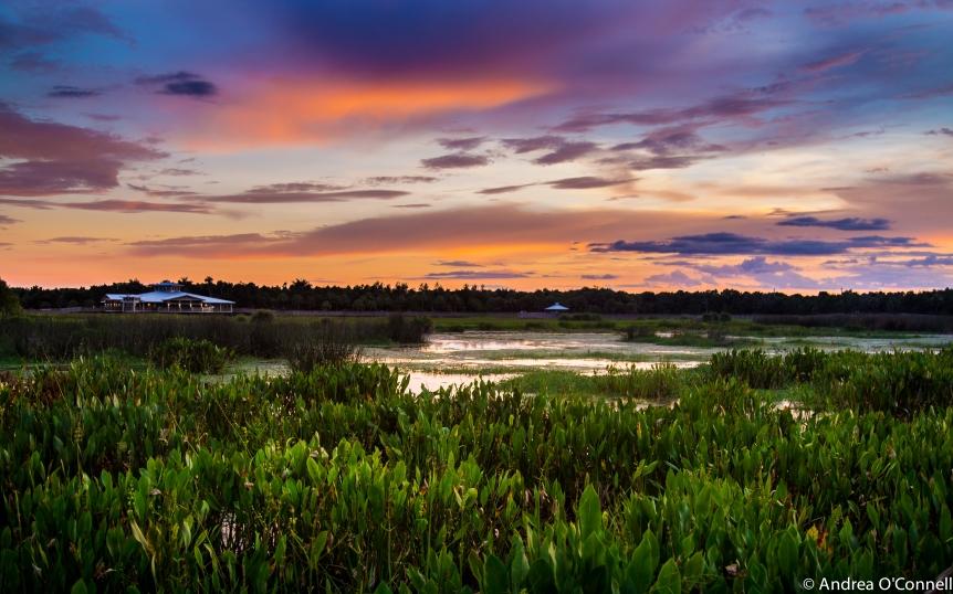 Sky Ablaze at Green Cay Wetlands